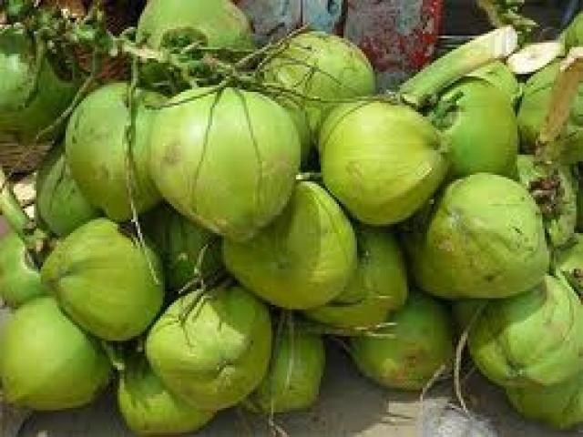 Coconut Cultivation in Cambodia