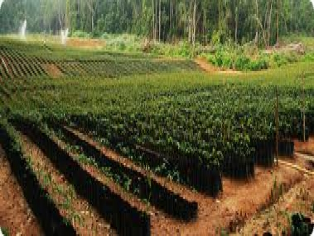 Land Concession  for Agricultural Plantation
