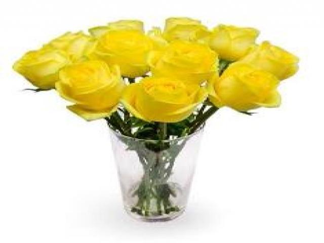 1 Dozen of Yellow Roses