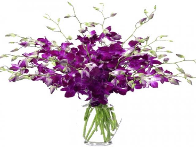 orchid boutique